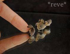 Realistic Miniature ~ Mallard Ducklings ~ Handmade Dollhouse 1:12 Sculpt