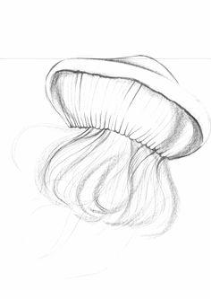 Sketch_Jellyfish_24