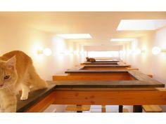 interior cat インテリア 猫    猫の家 写真集P03  黒い板の部分がキャットウォーク。全長10.5mあります。 大人の猫はルート通りに、ジグザグに歩きますが、 若い猫達は、平行になっている80cmの距離を余裕でジャンプしていきます。