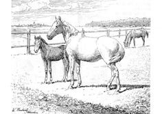 205 Best Coloring-Horses images | Coloring pages, Coloring book ...