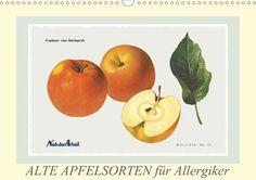 Alte Apfelsorten für Allergiker - CALVENDO