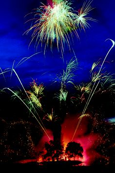 butchart gardens Summer Saturday night Firework shows at Butchart Gardens in August, 2015 Botanical Gardens Near Me, Buchart Gardens, Sky Ride, Sunken Garden, Famous Gardens, Fireworks Show, Earth From Space, Beautiful Places To Visit, Beautiful Things