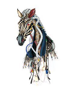 Cebra, cover book illustration.