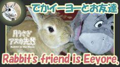 でかイーヨーとお友達【ウサギのだいだい 】 Rabbit's friend is Eeyore. 2016年4月11日