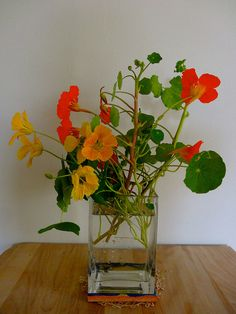 """""""She moved her eyes slowly up the jug past the thin green stems and little round leaves and saw...nasturtiums!  Red, yellow, gold, and ivory-white.  A head pain caught her between the eyes at the taking in of such a wonderful sight.  It was something to be remembered all her life.      """"'When I get big,' she thought, 'I will have such a brown bowl and in hot August there will be nasturtiums in it.'""""  A Tree Grows in Brooklyn by Betty Smith"""