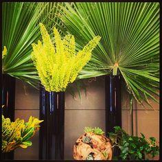 Tropical Transformation in The Hazelton lobby. Flowers of the week: Robusta Palm, Eremurus, Croton, Green Ivy.