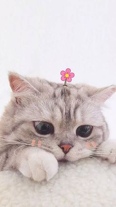 Super cute grey kitty with flower on their head