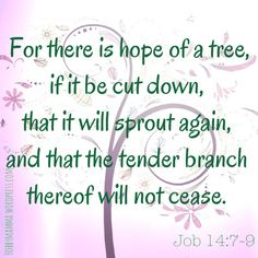 Job 14, comforting bible verses I must put this on my wall next to the tree I painted. It gives me so much hope.