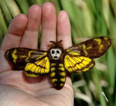 pammy dawn designs: Death's Head Hawk Moth Custom Pin Source by radarsoup Beautiful Bugs, Beautiful Butterflies, Amazing Nature, Cool Insects, Bugs And Insects, Beautiful Creatures, Animals Beautiful, Cool Bugs, Moth Caterpillar