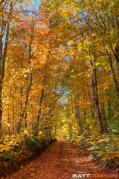 Photograph Autumn Path by Matt Dobson on 500px