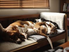 I love how these dogs love to sleep in a pile.