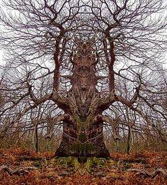 Vreemde, bijzondere en grappige bomen.