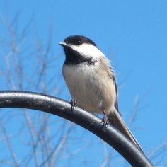 March Morning at Heron Brook Haven