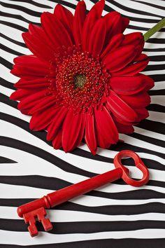 Red Mum And Red Key by Garry Gay via fineartamerica.com