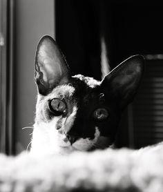 Peeking by Tracey McQuain on 500px