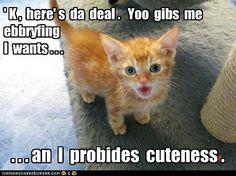 Lol, can't resist a cute kitty!