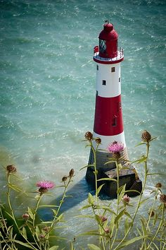 Lighthouse and thistles - Beachy Head Lighthouse, England. Built 1902
