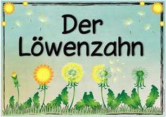 """Sachunterricht in der Grundschule: Themenplakat """"Der Löwenzahn"""""""