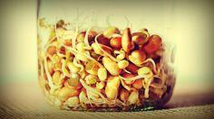 """Germinados: el alimento """"vivo"""" más antiguo: como hacerlos en casa. Comer semillas germinadas es comer vida."""
