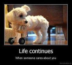 1 tough little dog!