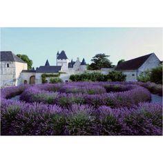 Lavender garden, Lemere,  France/Chateau du Rivau via chateaudurivau