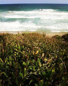 Natural beauty at 13th beach   #naturelovers #beachlife #coastalflowers #13thbeach #ig_australia  #aguideto #aguidetobarwonheads #barwonheadscafes  #smallbusiness #shoplocal #livelovelocal  #photography #ocean #beach #surf #art  #barwonheads #oceangrove #pointlonsdale #bellarine #bellarinepeninsula #gtown #geelong #melbourne #visitvictoria #tourismgeelong #SeeAustralia #visitgeelongbellarine #melbournetouristguide #workingtogethermakesusbetter by a_guide_to_barwonheads http://ift.tt/1JO3Y6G