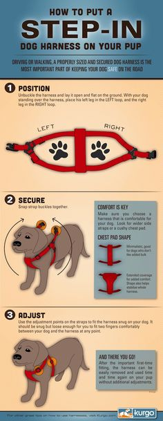 How to put on a step in dog harness. See harness reviews of most popular styles at http://barkandswagger.com/dog-harness-reviews-pros-cons-of-popular-styles