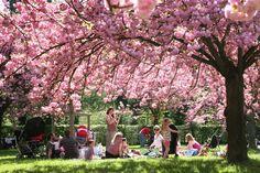 この季節は日本だけでなく、フランス人もお花見を楽しむのですよ!