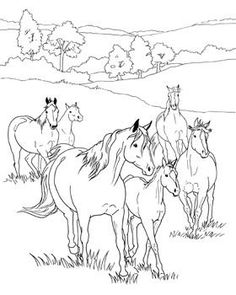 image result for realistic horse coloring pages