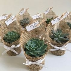 Succulent wedding favors - Succulent favors for weddings, birthdays, christenings, baby showers or any special occasion weddingfavors wedding favors ad succulent Succulent Wedding Favors, Succulent Gifts, Wedding Flowers, Wedding Plants, Succulant Wedding, Wedding Dresses, Garden Wedding, Wedding Favors And Gifts, Cool Wedding Gifts