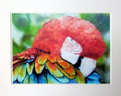 Parrot Giclee Print- A4 Quality Mounted Giclee Print of a Macaw Parrot - by Artist Suzie Nichols (art, painting) - pinned by pin4etsy.com