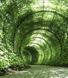 Túnel verde de plantas en Garden of Poisonous Plants en Alnwick Landscape Architecture, Landscape Design, Garden Design, Garden Structures, Garden Paths, Poison Garden, Tree Tunnel, Garden Pavilion, Sunken Garden