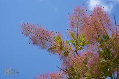 Baum Plants, Photography, Trees, Fotografie, Fotografia, Plant, Photograph, Planting, Planets