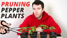 Growing Peppers, Pepper Plants, Urban Landscape, Harvest, The Creator, Gardening, Stuffed Peppers, Big, Youtube