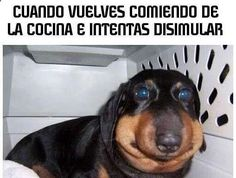 Imagenes de Humor #memes #chistes #chistesmalos #imagenesgraciosas #humor www.megamemeces.c... ➛➛ www.diverint.com/...