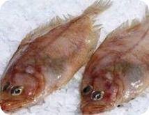 Beneficios del pescado gallo