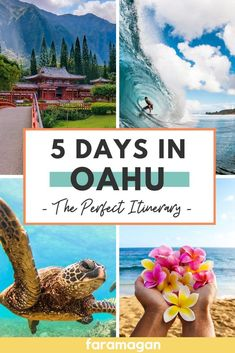 Hawaii Must Do, Visit Hawaii, Hawaii Travel Guide, Usa Travel Guide, Oahu Vacation, Fun Vacations, Oahu Things To Do, Waimea Falls, Hawaii Destinations