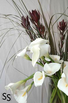 Calas Blancas/White Cala Lilie