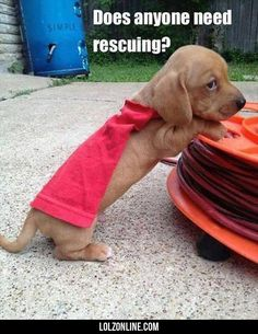 Does Anyone Need Rescuing?#funny #lol #lolzonline