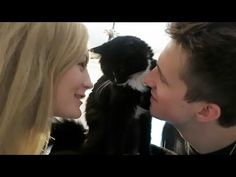 Playing With Cats Marcus Butler, British Youtubers, 22 Years Old, Cats, Gatos, Cat, Kitty, Kitty Cats