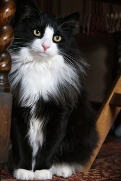 Jack by Helen Haden Cute Baby Cats, Kittens And Puppies, Cute Cats And Kittens, Cool Cats, Kittens Cutest, Pretty Cats, Beautiful Cats, Animals Beautiful, Cute Animals