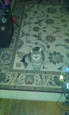 "Last call sobber kitty ""waffle"" http://ift.tt/2wSnteH"