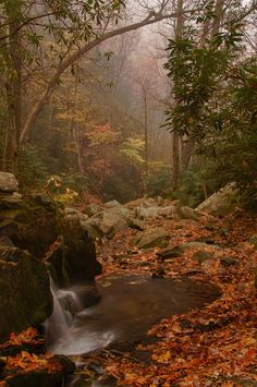Creek below Laurel Falls, Great Smoky Mountains National Park, Tennessee (Melissa Southern)