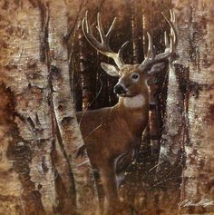 Birchwood Buck - Deer, Hand Signed Artist Proof by Collin Bogle – Collin Bogle Nature Art Wildlife Paintings, Animal Paintings, Deer Paintings, Deer Art, Moose Art, Deer Pictures, Buck Deer, Tier Fotos, Wildlife Nature
