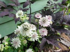 Companion Planting, Garden Plants, Garden Ideas, Flowers, Landscaping Ideas, Backyard Ideas, Royal Icing Flowers, Flower, Florals