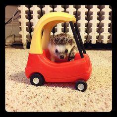 Driving | Flickr