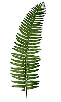A few spots of green fern will be added to all bridesmaids.