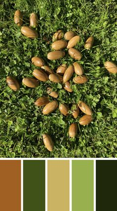 WALK THE TALK - Acorns collected by Travie during lockdown. Check out the blog to find out how to track your story x