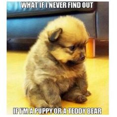40 Best Puppy Quotes images | Puppy quotes, Cute animals ...