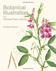 Botanical Illustration from Chelsea Physic Garden by Andr…